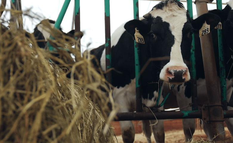 As Milk Prices Decrease, Worries About Dairy Farmer Suicides Rise